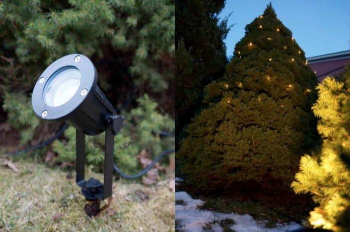 spotlight och buskage